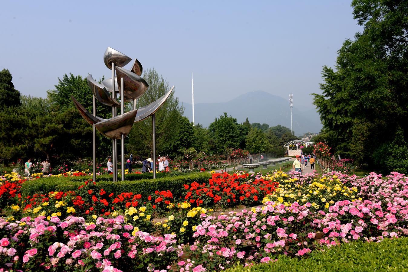 北京植物园月季展