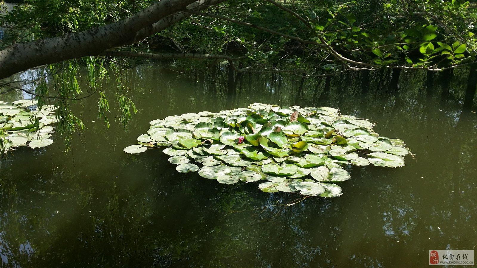 浑河长白岛森林公园垂钓2