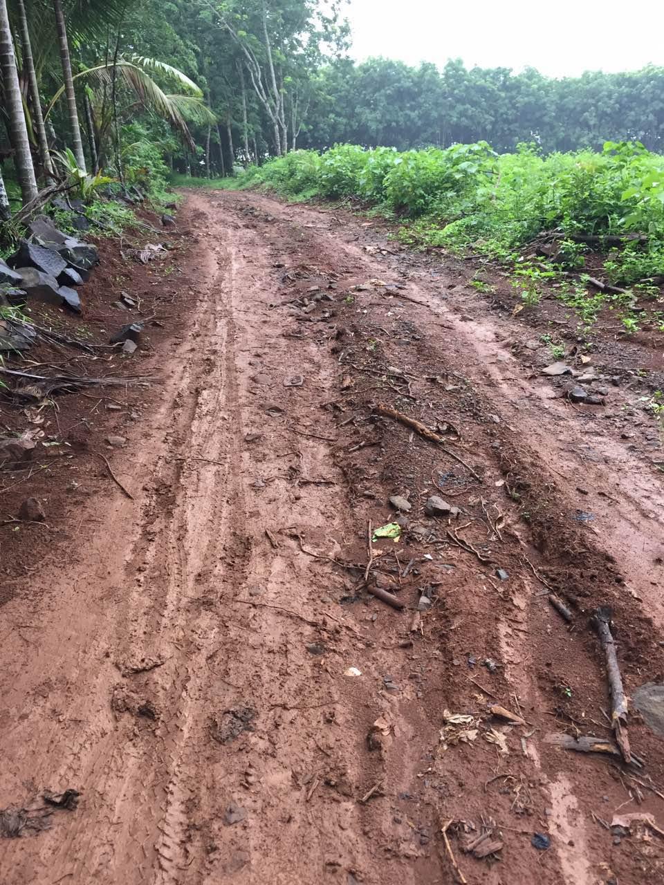 大路镇湖仔村委会坡上园村的路太烂了!能不能修一修!