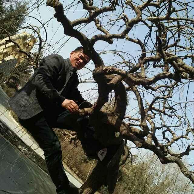 常年收木头,风景树,电1829199184